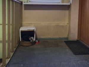Po lewej stronie drewniana barierka. Po prawej stronie drzwi do mieszkania, a przed nimi wycieraczka. Między barierką a drzwiami widać parapet, pod nim na podłodze stoi domek dla kota, zbudowany z kartonu z wyciętą przednią ścianką, góra i boczne ścianki pokryte styropianem, u dołu brązowe legowisko, po prawej stronie czerwona miska. Na legowisku leży czarno-biały kot.