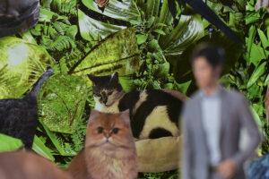 Kolaż. Na tle z zielonej, bujnej, egzotycznej roślinności naklejone są wycięte wizerunki dwóch kotów i mężczyzny w garniturze.