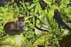 Kolaż. Na tle z zielonej, bujnej, egzotycznej roślinności naklejone są wycięte wizerunki kota, motyla i papugi.