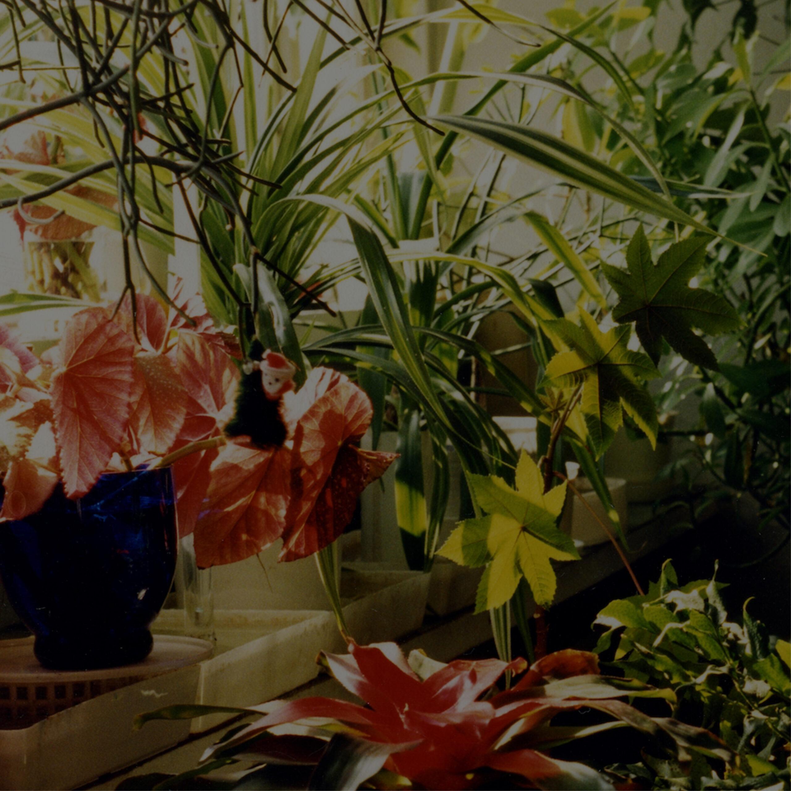 Plants in Zdzisław Jurkiewicz's flat, private archive
