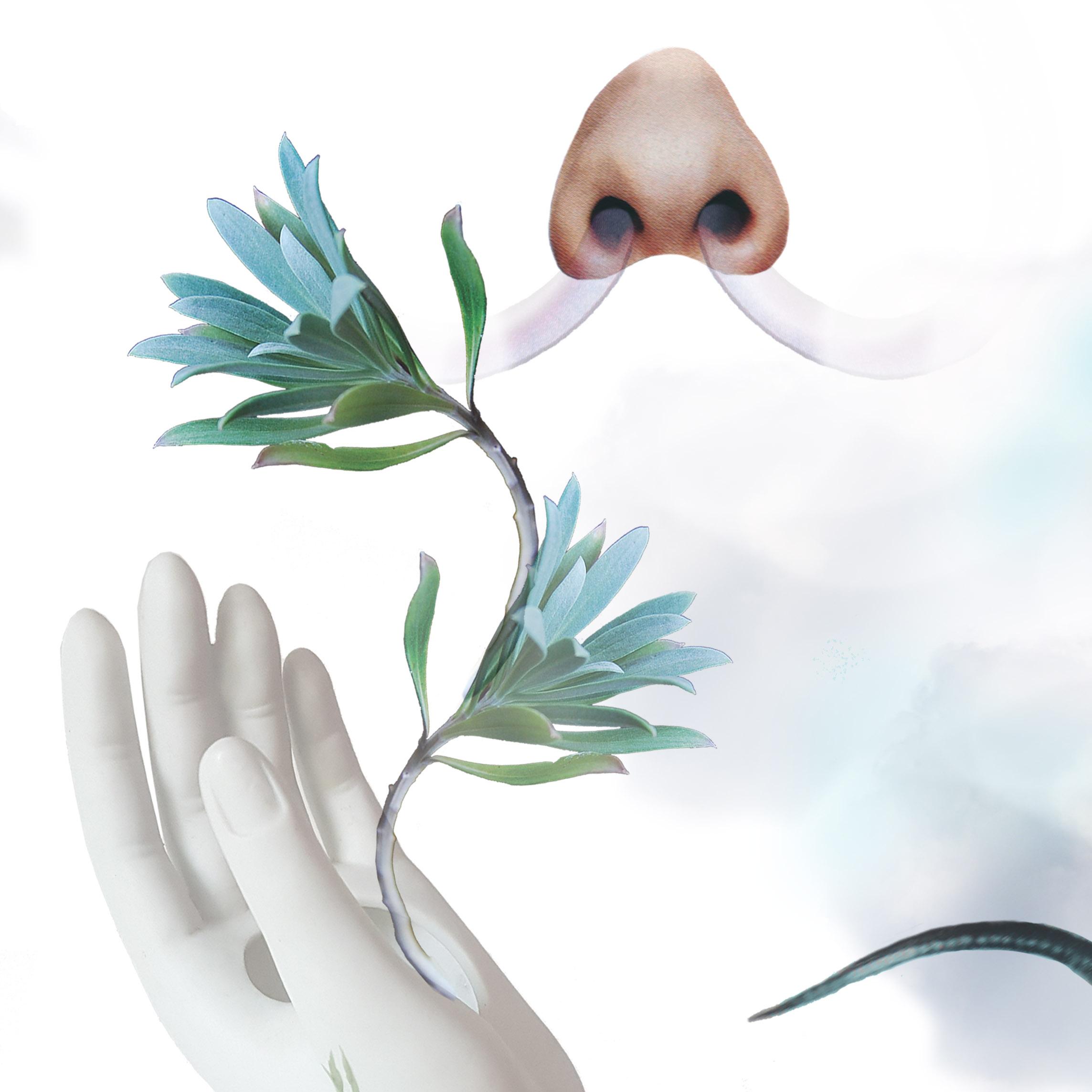 Grafika barwna w formacie kwadratu. Kolaż na białym tle. W prawym górnym rogu nos, z którego dziurek wychodzą dwa wydechy. W lewym dolnym rogu biała dłoń, z której wyrasta duża zielona gałązka.