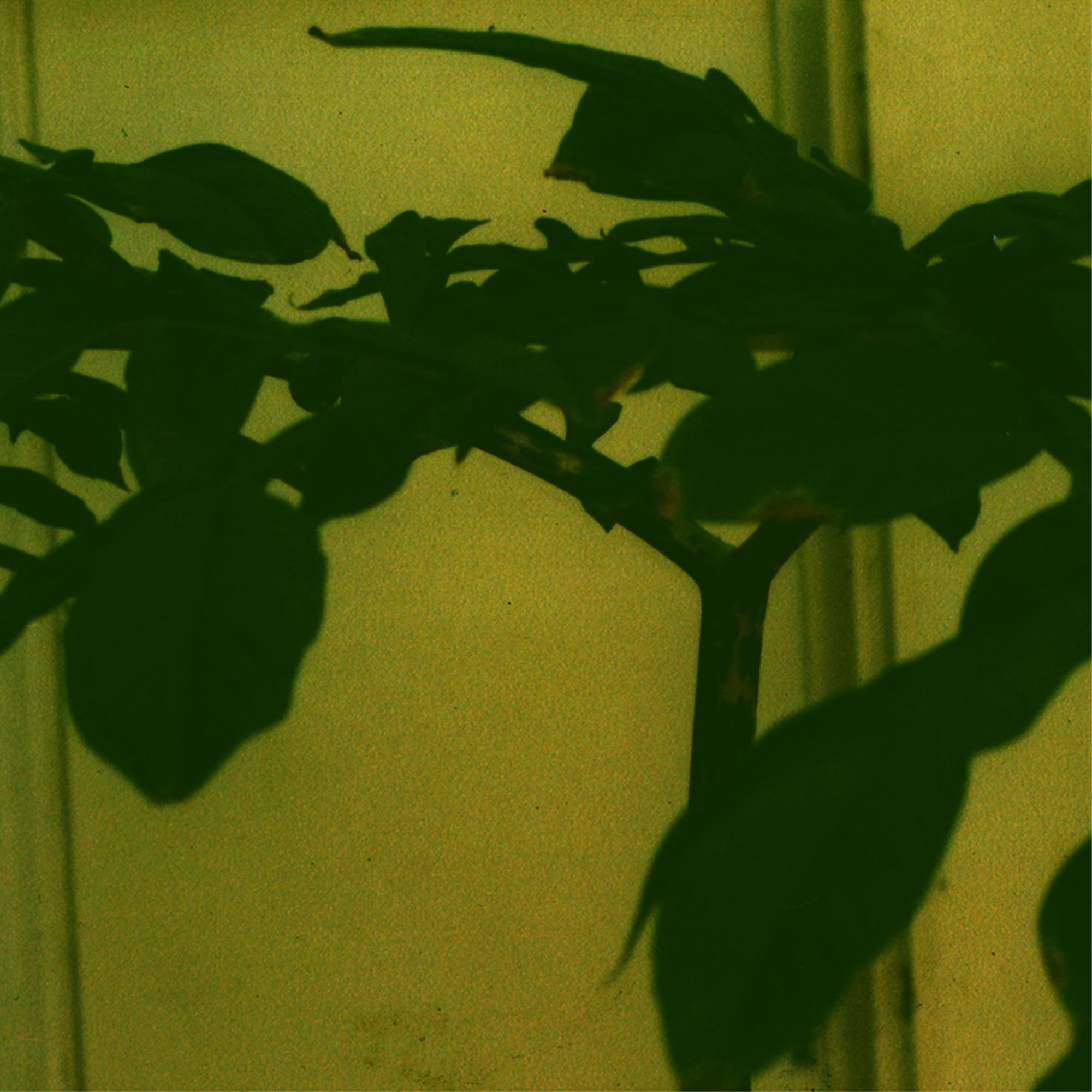 Rośliny w mieszkaniu Zdzisława Jurkiewicza, archiwum prywatne